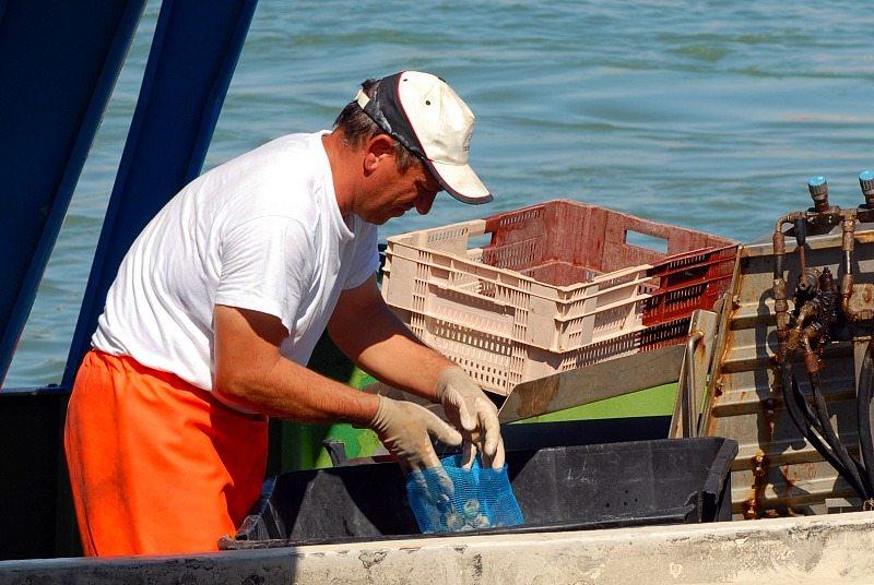 Mercato Ittico al Porto di San Benedetto del Tronto