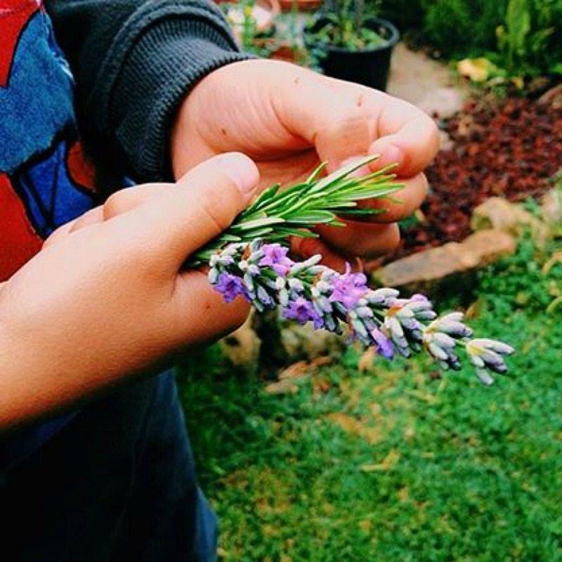 Caccia erbe spontanee #sibilliniforkids © Andrea Braconi