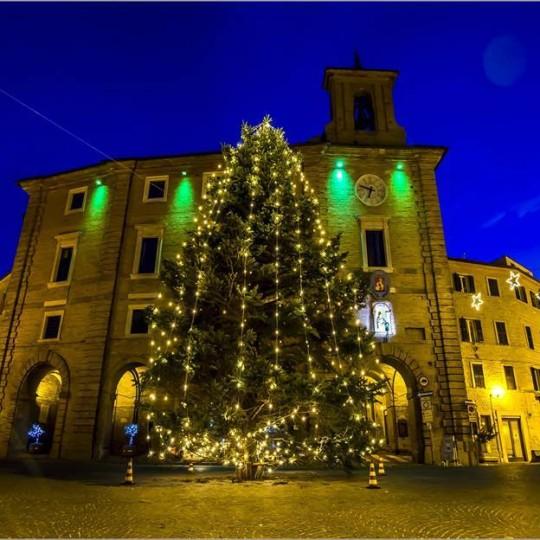 Il grande albero in piazza a Cupramontana (AN) © Vincenzo Mollaretti