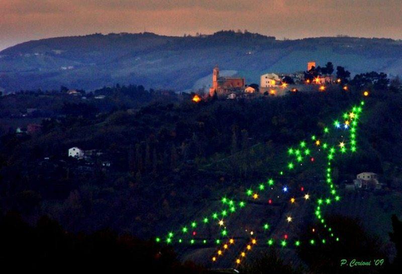 albero luminoso sulla collina di castelbellino