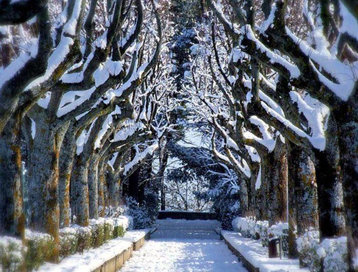 Il viale alberato del Parco Celeste Erard © Blog Rete dei Comuni Italiani
