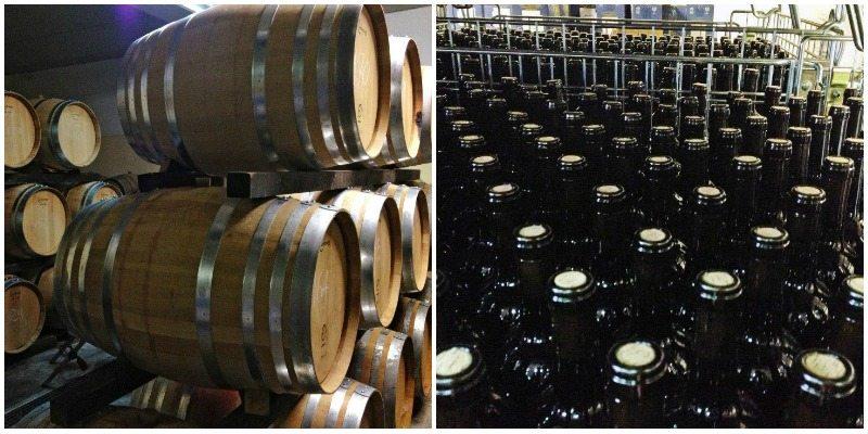 Il buon vino delle marche fatto con cura, passione e amore