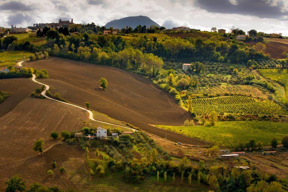 Le meravigliose colline di Cupramontana (AN), © Marika Bonci
