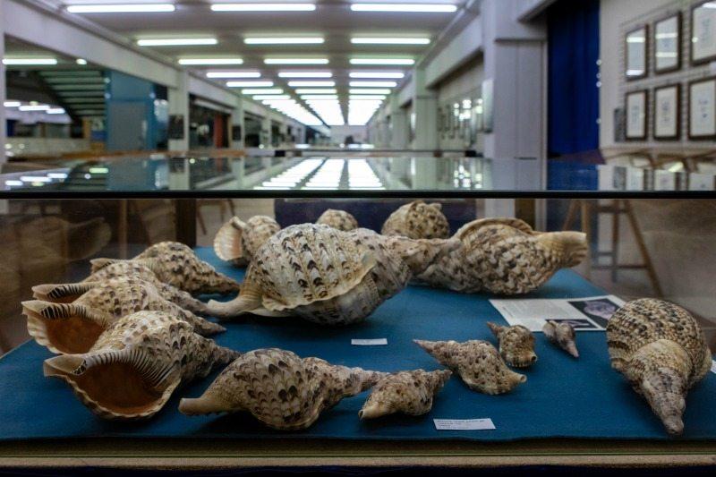 Museo Malacologico di Cupramarittima © Foto Turismo Marche