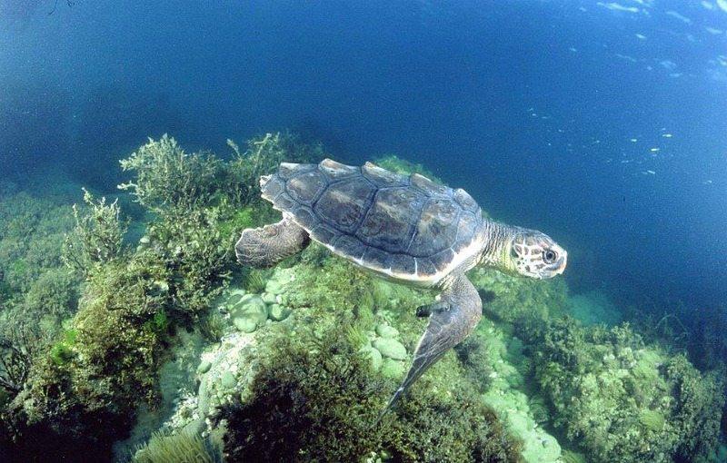 numana-tartarughe2