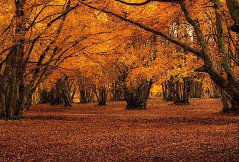 Faggi secolari in autunno a Canfaito