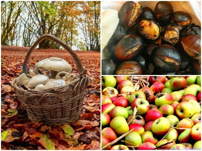 Sapori d'autunno nelle Marche. Foto di Stefano Grilli e Alessia Castelletti