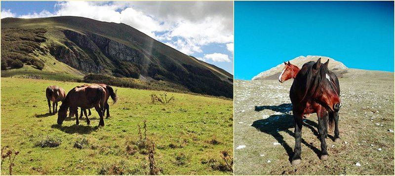 Il Cavallo del Catria (foto a sinistra © Il Ponticello, a destra @ceccarellisusanna by Instagram)