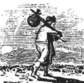 Antica illustrazione della gluppa