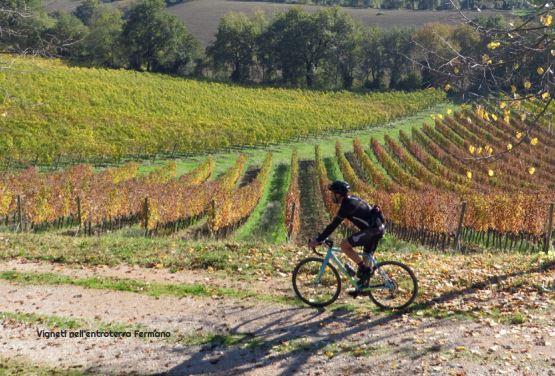 ciclista tra i filari delle vigne della campagna dela provincia di Fermo